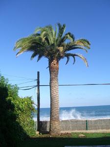 Poda de palmeras en valencia for Iluminacion para palmeras